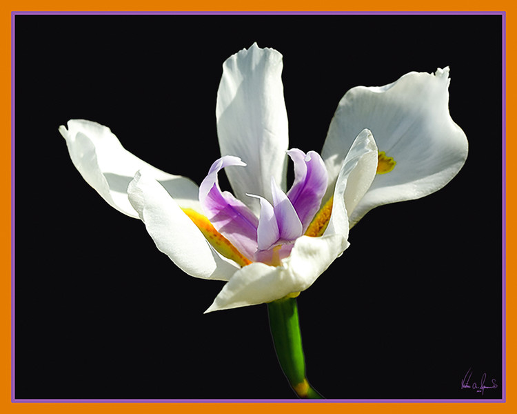 """JUST A PRETTY FLOWER"""