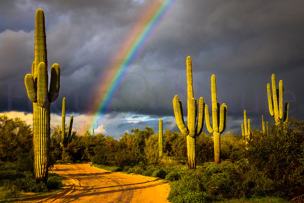 Saguaro Rainbow-Wide