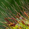 Broad Ripple Nature July 16