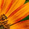 Broad Ripple Nature July 31
