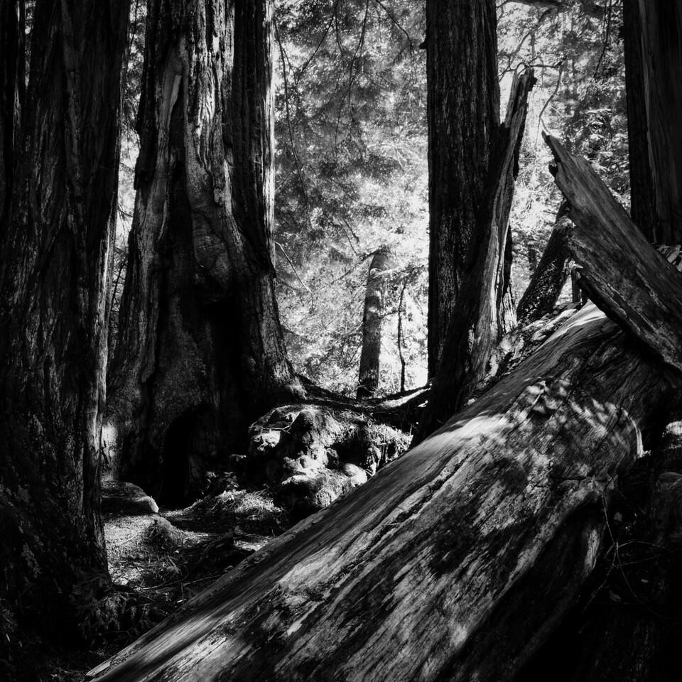 Hidden Grove