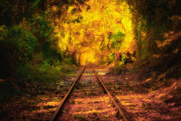 Autumn Passage
