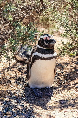 Deep Meditative State Penguin
