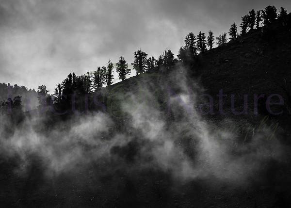 Moody Mist