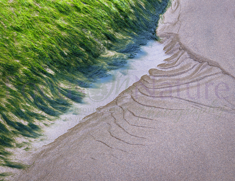 Algae And Ripples