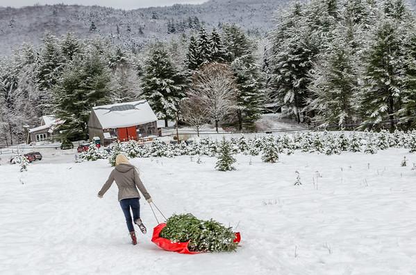 Meadow Ridge Christmas Tree Farm