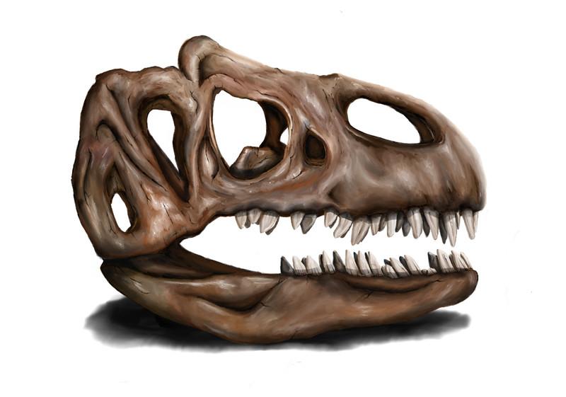 Allosaurus fragilis painting / illustration