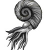 Ammonite, charcoal and pastel - 2020