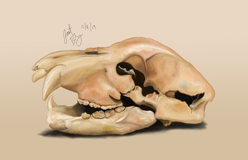 Cave bear painting, pastel, 2019