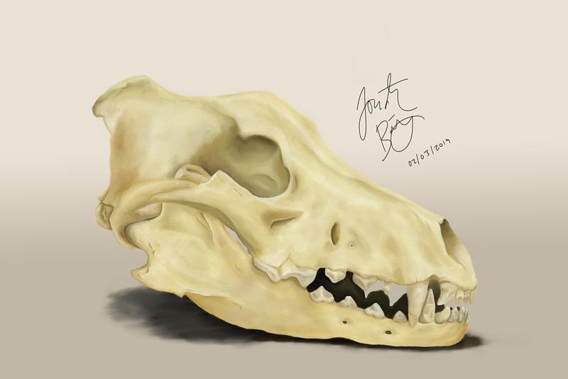 Dire Wolf Skull, pastel, 2019