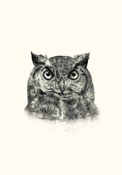 Great horned owl, graphite, 2020