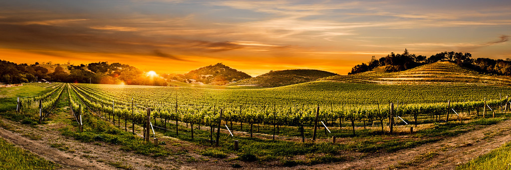 This is Napa Valley