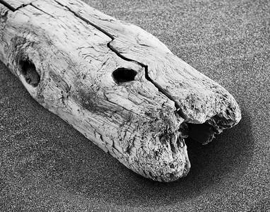 Driftwood Study