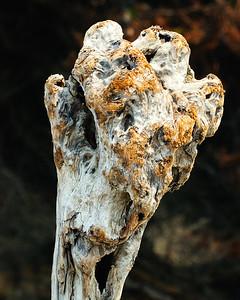 Giraffe Driftwood Face