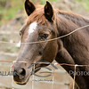 Horse with No Name © Amy Gallatin, all rights reserved.