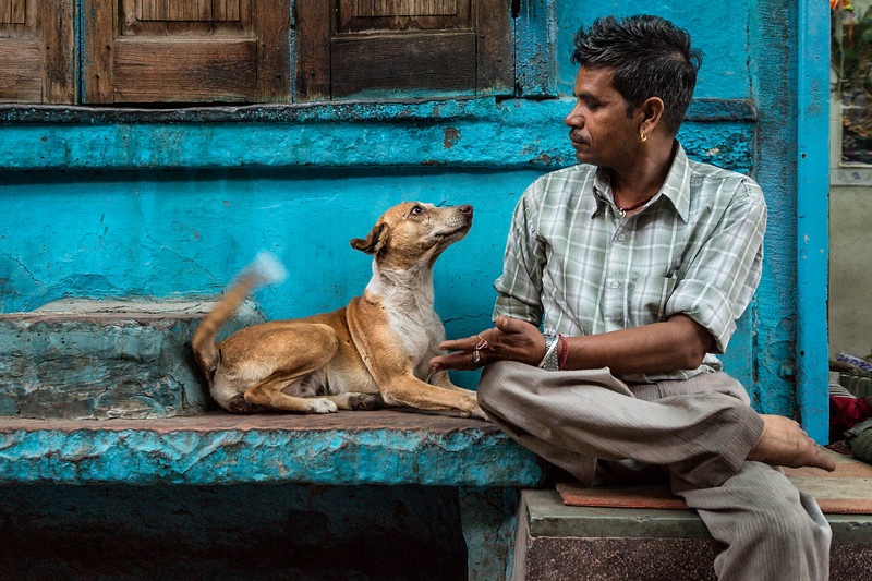 Ram the chai wall, and a street dog begging for a treat.