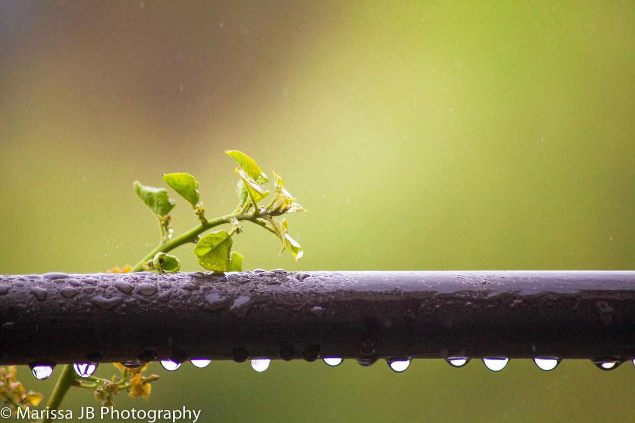 The beauty of a rainy day