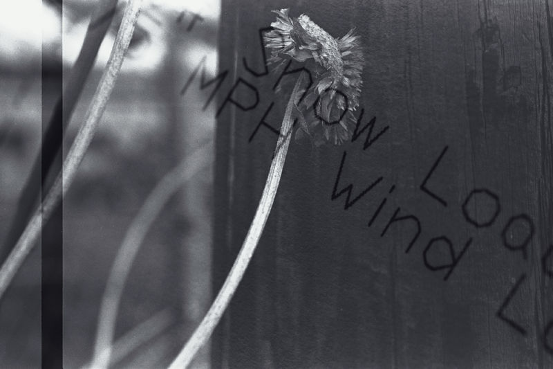 these are double-exposure film negatives, not digital productions; click on the image to see it larger