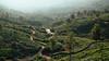 Kanan Devan Hills, Munnar