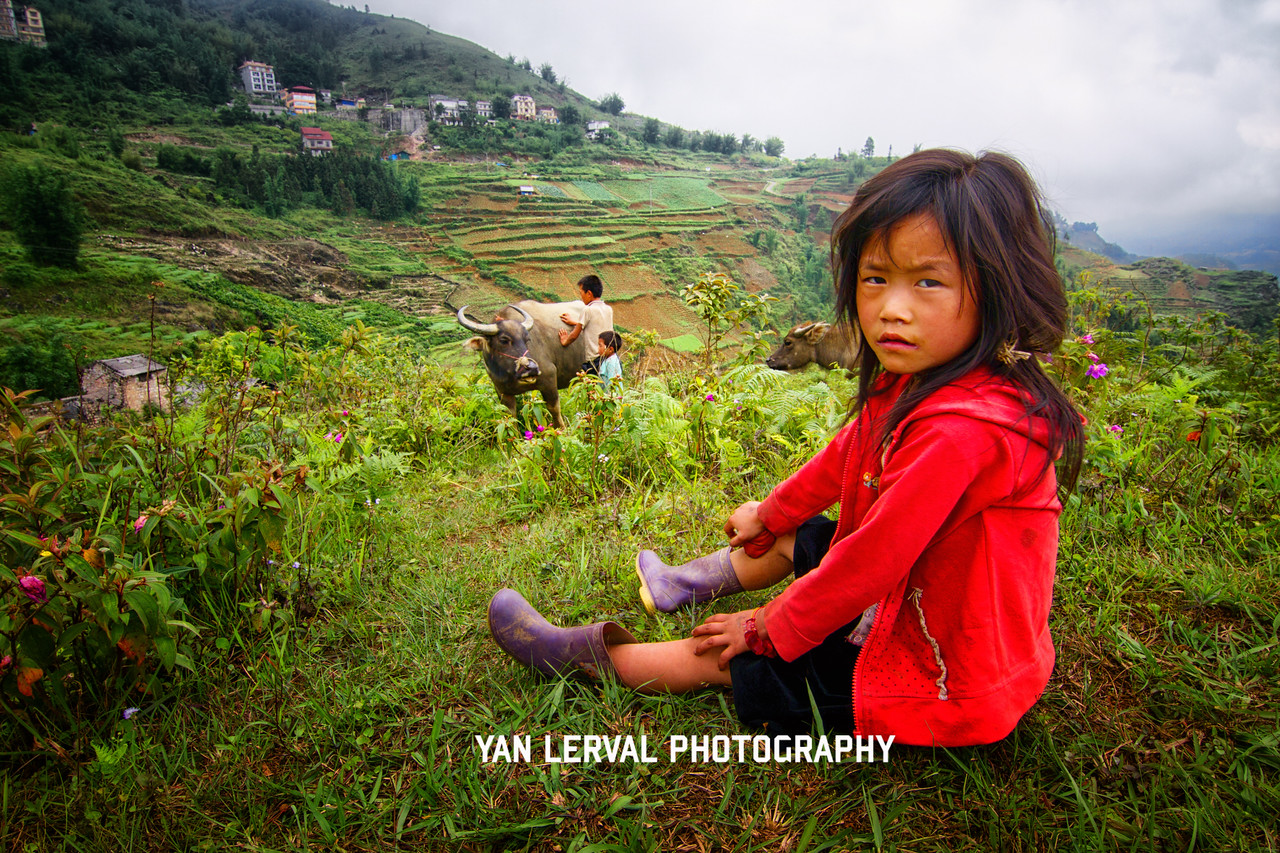 Young girl and buffalos in Sapa