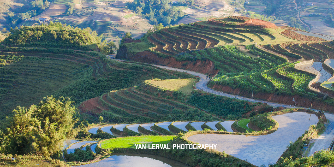 Terraced rice fields in Sa Pa, Vietnam