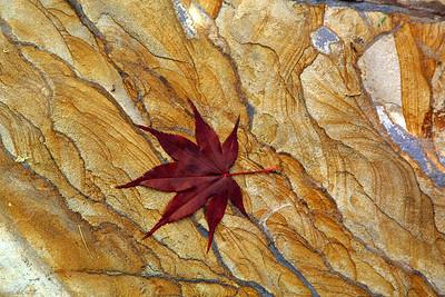 Maple leaf on stepping stone