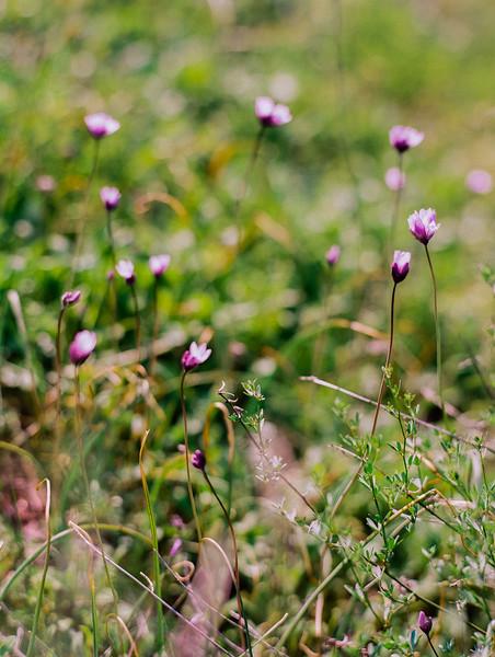 Wildflowers-001123640002