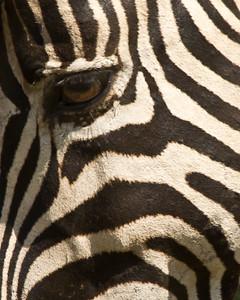 { zebra eye }