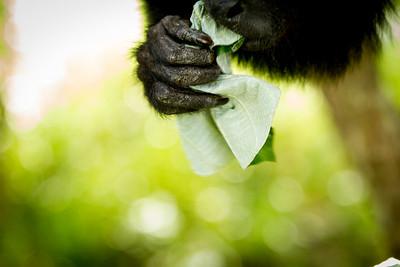 { monkey hand }