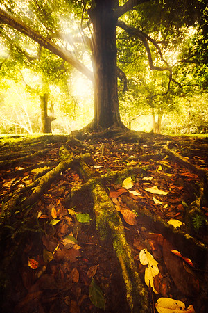 {spellbinding roots}