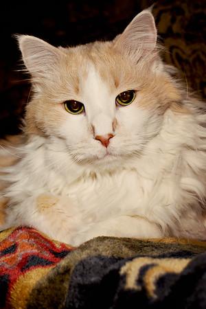 cozzetto_cats-18