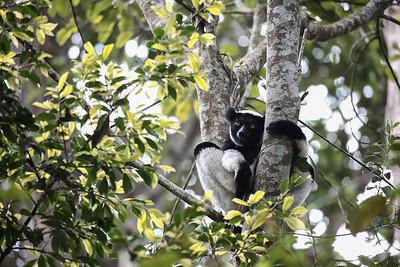 Chill Indri