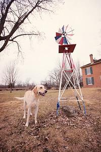 gunderson_dogs2017-7