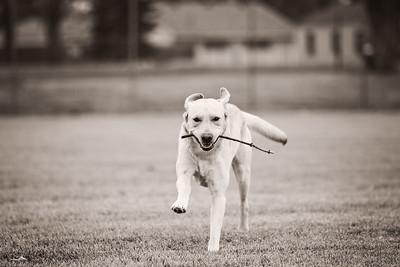 gunderson_dogs2017-22
