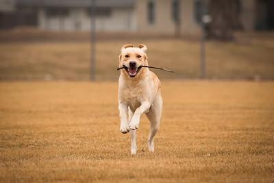 gunderson_dogs2017-21