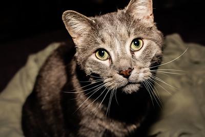 cozzetto_cats-9