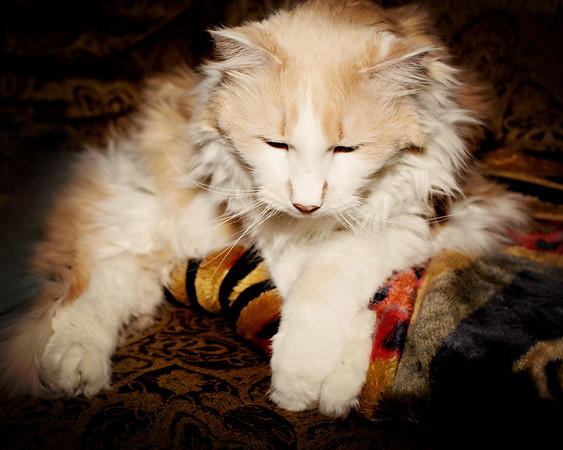 cozzetto_cats-12
