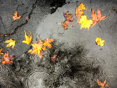 Autumn Leaves and Rain Puddles
