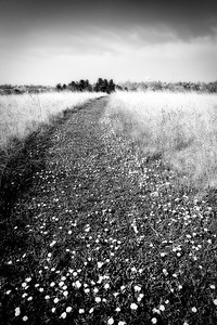 Path through the Prarie - West Branch, Iowa