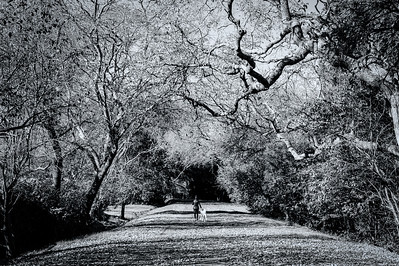 Bike Path, Lafayette California