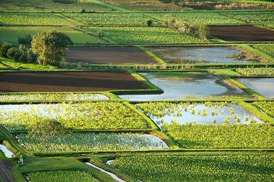 Green Fields, Kauai, HI