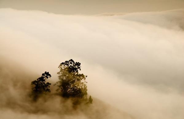Silk Fog