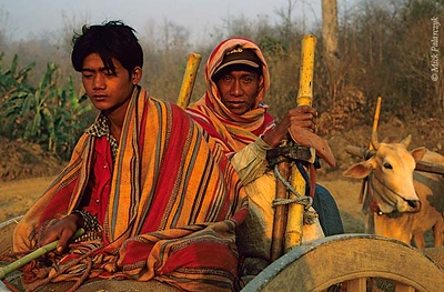 [BURMA 24.768] 'Farmers on ox-cart.' In the early morning light farmers are heading for their fields on an ox-cart in the highlands west of Kalaw. Photo Mick Palarczyk.