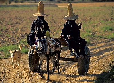 [YEMEN.SOUTH 26609 'Witches on a cart.'  Near Al-Quatn women wearing tall straw witches' hats - known as madhalla - drive through the fields of the Wadi Hadhramawt on a donkey cart. Photo Mick Palarczyk.