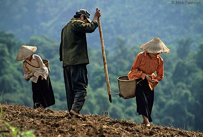 [VIETNAM.NORTH 21.362] 'Sowing maize.'	 Sowing a field on the slopes of the Nâm Muc valley south of Lai Châu: the man pricks holes in the soil and the women drop maize seeds in them. Cultivation on steep slopes causes severe soil erosion in this region. Photo Mick Palarczyk.