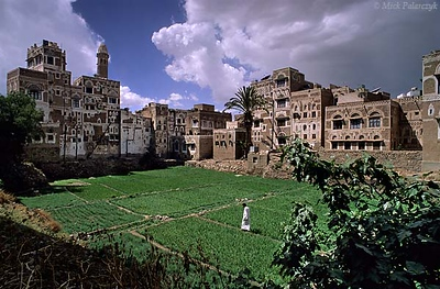 [YEMEN.NORTH 26425 'Garden in Harat At-Tawash quarter.'  In Sana each city quarter (harat) has its own city garden (bustan). As the gardens are mostly situated in the vicinity of mosques, the radishes, onions and fruit trees in the bustan are irrigated with water from the same wells that supply the ritual washing basins of the mosques. Photo Mick Palarczyk.