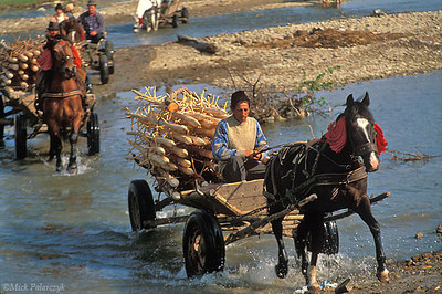 [ROMANIA.MOLDAVIA 24.023] 'Crossing the river.'	 Returning from the market at Gura Humorlui and crossing a tributary of the Moldova these farmers transport stakes on which they will pile their freshly mown hay. Photo Mick Palarczyk.