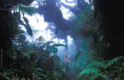 [ANTILLES.SABA 25.539] 'Foggy forest walk'.	 Walking through the Saban cloud forest is most special just after sunrise, when a mysterious blue light pervades the wood. Photo Mick Palarczyk.
