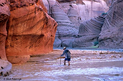 [USA.UTAH 28083] 'Paria Canyon.'  A trek through the colourful Paria Canyon involves crossing the water every hundred meters. Using a stick can help you to avoid quicksand. The canyon of the Paria (a tributary of the Colorado) can be found east of Kanab and south of route 89. Photo Mick Palarczyk.