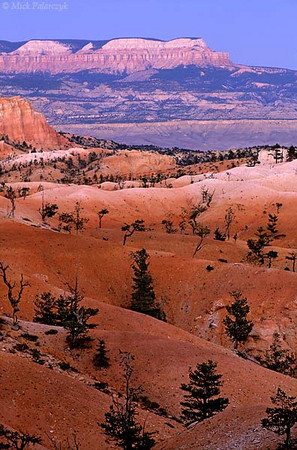 [USA.UTAH 28113 'Table Cliff Plateau seen from Bryce.'  Bryce Canyon National Park is famous for its weird landscape of pinnacles (hoodoos) which consist of a poor grade of limestone that is easily eroded by flashfloods descending from the nearby plateau. The eastern edge of the park shows the final stage of erosion: the spectacular towers are reduced to undulating hills of red ruble. In the distance you can see the valley of the Paria River with on the horizon the Table Cliff Plateau, ending to the right in Powell Point. Photo Mick Palarczyk.